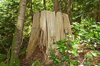 Photo 6: Lot 4 WAKEFIELD Road in Sechelt: Sechelt District Land for sale (Sunshine Coast)  : MLS®# R2428424