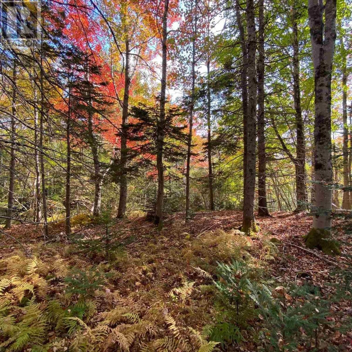 Main Photo: Acreage Middle New Cornwall in Middle New Cornwall: Vacant Land for sale : MLS®# 202125307