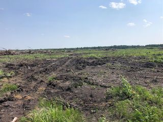 Photo 3:  in Grunthal: R17 Farm for sale : MLS®# 202118621