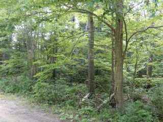 Photo 4: Pictou Landing Road in Pictou Landing: 108-Rural Pictou County Vacant Land for sale (Northern Region)  : MLS®# 202118664