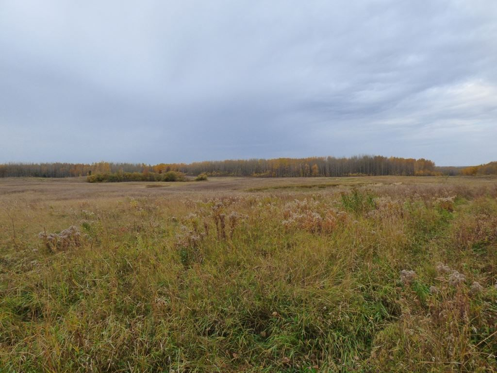 Photo 11: Photos: N1/2 SE19-57-1-W5: Rural Barrhead County Rural Land/Vacant Lot for sale : MLS®# E4217154
