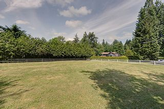 Photo 15: 25990 116TH Avenue in Maple Ridge: Websters Corners House for sale : MLS®# V1097441