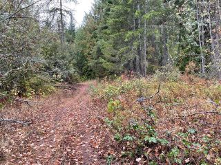 Photo 15: 292 Terry Road, in Enderby: Vacant Land for sale : MLS®# 10239679