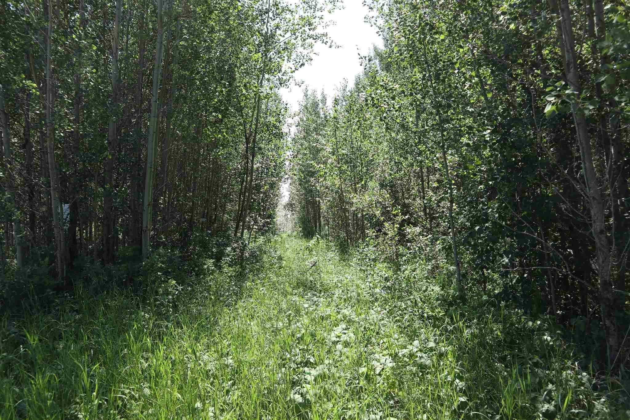 Main Photo: TWP 494 RR 42: Rural Leduc County Rural Land/Vacant Lot for sale : MLS®# E4252228