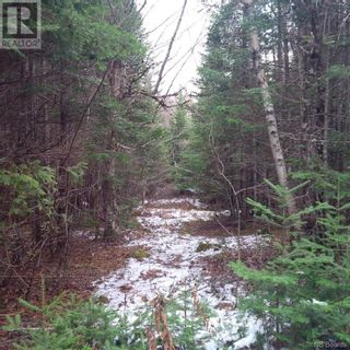 Photo 10: - Yourette Road in Dewolfe: Vacant Land for sale : MLS®# NB062662