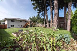 Photo 19: 542 Hallsor Dr in VICTORIA: Co Wishart North House for sale (Colwood)  : MLS®# 791609