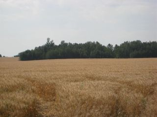 Photo 10: SE 20 30 1 W5 Highway 2A: Carstairs Residential Land for sale : MLS®# A1067588