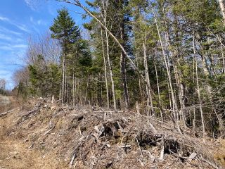 Photo 7: 65 Eaglet Lane in Musquodoboit Harbour: 35-Halifax County East Vacant Land for sale (Halifax-Dartmouth)  : MLS®# 202109854