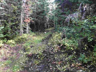 """Photo 9: DL 1599 W 16 Highway in Prince George: Lafreniere Land for sale in """"LAFRENIERE"""" (PG City South (Zone 74))  : MLS®# R2508129"""