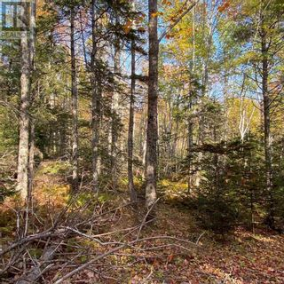 Photo 6: Acreage Middle New Cornwall in Middle New Cornwall: Vacant Land for sale : MLS®# 202125307