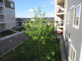Photo 31: 213 5804 MULLEN Place in Edmonton: Zone 14 Condo for sale : MLS®# E4222798