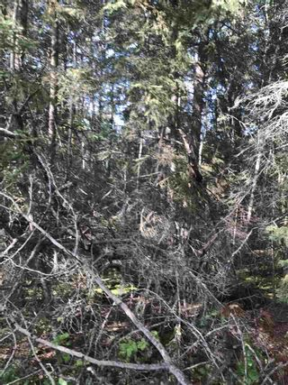 Photo 23: Pinebrook Block 1 Lot 2: Rural Thorhild County Rural Land/Vacant Lot for sale : MLS®# E4171871