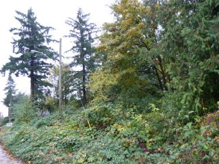 Photo 10: 16577 Old McLellan Road in Richardson Ridge: Home for sale : MLS®# F1225571