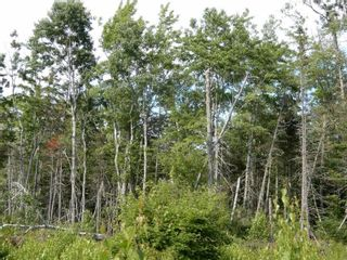 Photo 5: Battist Road in Sundridge: 108-Rural Pictou County Vacant Land for sale (Northern Region)  : MLS®# 202119320