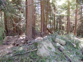 "Photo 6: LOT 3 FORIN ROAD: Keats Island Land for sale in ""EASTBOURNE"" (Sunshine Coast)  : MLS®# R2459870"