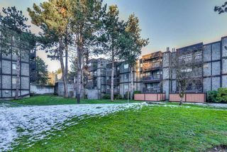 "Photo 18: 502 9672 134 Street in Surrey: Whalley Condo for sale in ""Parkswood (Dogwood Building)"" (North Surrey)  : MLS®# R2230294"