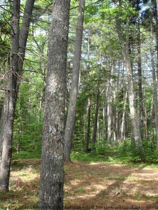 Photo 15: Lot 11 RAFUSE POINT Road in Pleasantville: 405-Lunenburg County Vacant Land for sale (South Shore)  : MLS®# 202122075