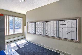 Photo 6: 201 4407 23 Street in Edmonton: Zone 30 Condo for sale : MLS®# E4254389