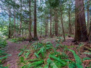 Photo 17: 3204 HUCKLEBERRY Road: Roberts Creek House for sale (Sunshine Coast)  : MLS®# R2364064