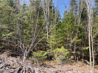 Photo 13: 65 Eaglet Lane in Musquodoboit Harbour: 35-Halifax County East Vacant Land for sale (Halifax-Dartmouth)  : MLS®# 202109854