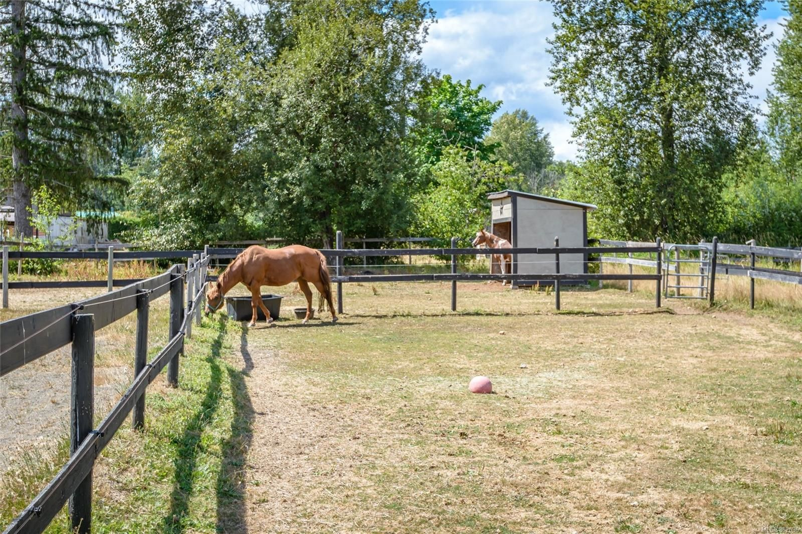 Photo 29: Photos: 3554 MacAulay Rd in : CV Merville Black Creek House for sale (Comox Valley)  : MLS®# 882696