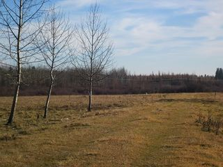 Photo 18: NW 24-54 RR 131: Niton Junction Rural Land for sale (Edson)  : MLS®# 32590