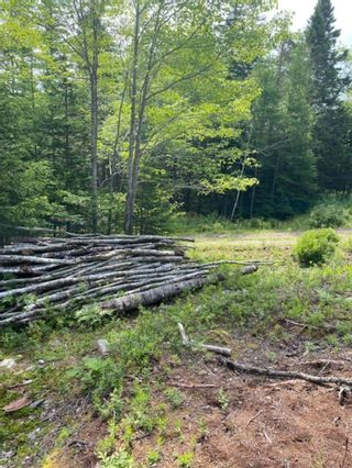 Photo 5: HL-XAC 245 Old Halifax Road in Glen Haven: 40-Timberlea, Prospect, St. Margaret`S Bay Vacant Land for sale (Halifax-Dartmouth)  : MLS®# 202118186