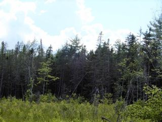 Photo 8: Battist Road in Sundridge: 108-Rural Pictou County Vacant Land for sale (Northern Region)  : MLS®# 202119320