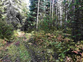 """Photo 11: DL 1599 W 16 Highway in Prince George: Lafreniere Land for sale in """"LAFRENIERE"""" (PG City South (Zone 74))  : MLS®# R2508129"""