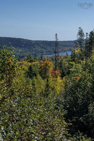 Photo 12: 2014 Myra Road in Porters Lake: 31-Lawrencetown, Lake Echo, Porters Lake Vacant Land for sale (Halifax-Dartmouth)  : MLS®# 202125407