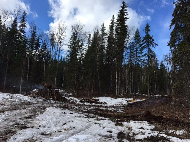 Photo 6: Photos: LOT 1 MARSH Road in Quesnel: Quesnel - Rural West Land for sale (Quesnel (Zone 28))  : MLS®# R2560822