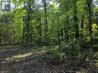 Photo 10: N/A RANEY Road E in Sundridge: Vacant Land for sale : MLS®# 40129602