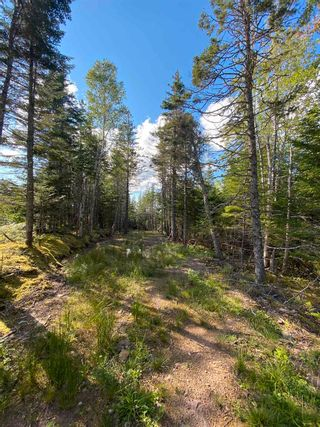 Photo 4: Lot Highway 4 False Bay Brook in River Bourgeois: 305-Richmond County / St. Peters & Area Vacant Land for sale (Highland Region)  : MLS®# 202123291