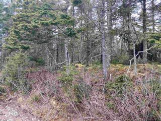 Photo 3: 1985 Ostrea Lake Road in Ostrea Lake: 35-Halifax County East Vacant Land for sale (Halifax-Dartmouth)  : MLS®# 202106036