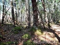 Photo 4: Lot 170 Halibut Hill in : Isl Mudge Island Land for sale (Islands)  : MLS®# 866549