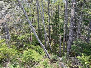 Photo 10: Lot Mushaboom Road in Mushaboom: 35-Halifax County East Vacant Land for sale (Halifax-Dartmouth)  : MLS®# 202114485