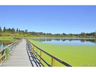 Photo 15: 4041 Nelthorpe St in VICTORIA: SE High Quadra Land for sale (Saanich East)  : MLS®# 685817