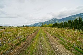 Photo 38: 5111 TOLMIE Road in Abbotsford: Sumas Prairie House for sale : MLS®# R2605990