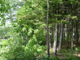 Photo 9: Lot 11 RAFUSE POINT Road in Pleasantville: 405-Lunenburg County Vacant Land for sale (South Shore)  : MLS®# 202122075