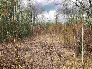 Photo 1: 85 15065 Twp Rd 470: Rural Wetaskiwin County Rural Land/Vacant Lot for sale : MLS®# E4243878