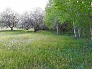 Photo 6: 11 Palmer Road in Harmony: 404-Kings County Vacant Land for sale (Annapolis Valley)  : MLS®# 202006110