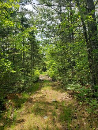 Photo 3: Lot 101 Dorey Mills Road in Clearland: 405-Lunenburg County Vacant Land for sale (South Shore)  : MLS®# 202119645
