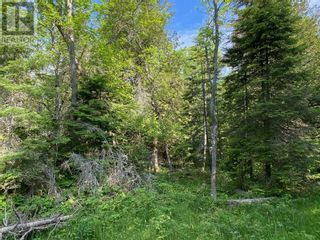 Photo 16: PT LT 58, Con 1 Manitou Shores in Assiginack: Vacant Land for sale : MLS®# 2095659