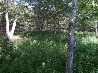 Photo 6: Lots Shore Road in Churchover: 407-Shelburne County Vacant Land for sale (South Shore)  : MLS®# 202011924