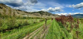Photo 17: DL425 HIGHWAY 3 in Midway: Agriculture for sale : MLS®# 2459270