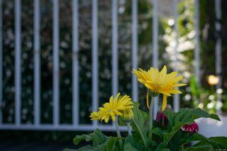 Photo 20: 33 658 Alderwood Rd in : Du Ladysmith Manufactured Home for sale (Duncan)  : MLS®# 873299