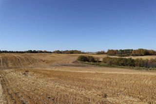 Photo 6: TWP 495 RR 232: Rural Leduc County Rural Land/Vacant Lot for sale : MLS®# E4216268