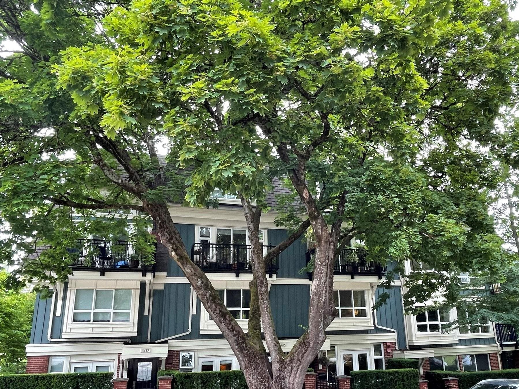 """Main Photo: 3685 W 12TH Avenue in Vancouver: Kitsilano Townhouse for sale in """"TWENTY ON THE PARK"""" (Vancouver West)  : MLS®# R2622614"""