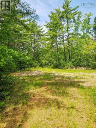 Photo 12: Lot 101 Dorey Mills Road in Clearland: Vacant Land for sale : MLS®# 202119645