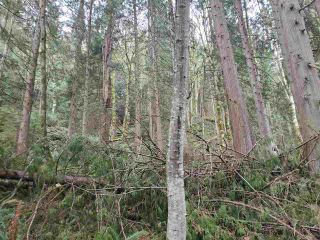 Photo 7: Lot 1 DL 3043: Keats Island Land for sale (Sunshine Coast)  : MLS®# R2554223